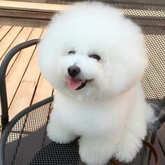 Such a fluffy pup(: