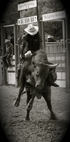 i love to watch bull riding!