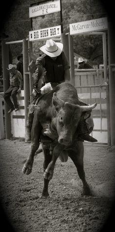 bull riding.