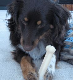 Understanding Dog Resource Guarding: A Guide To Possessiveness Over Food, Bones…