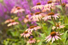 Home - Caroline Piek Photography Plants, Photography, Fotografie, Photography Business, Photo Shoot, Plant, Fotografia, Photograph, Planting