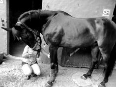 #Caballos #Horse #Equine #Equestrian #Hipico #Hipismo #ShowJumpingHorse