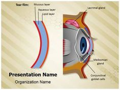 Cornea Tear Film Formation Powerpoint Template is one of the best PowerPoint templates by EditableTemplates.com. #EditableTemplates #PowerPoint #Eye #Anatomy #Ophthalmologist #Biology #Vision #Cornea #Optic #Ophthalmology