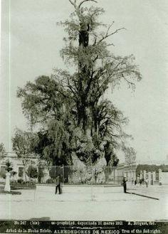 Increíble foto de 1901 del Árbol de la Noche Triste en Popotla. Fue incendiado en dos ocasiones siendo el más destructivo en 1981