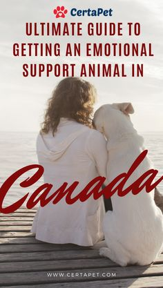 Getting an emotional support animal in Canada has plenty of advantages. Whether you live in a big city like Toronto or in a small town such as Jasper, becoming an ESA owner might be just what you need. Horses And Dogs, Animals And Pets, Baby Animals, Cute Animals, Support Dog, Emotional Support Animal, Therapy Dogs, Pet Health, Mental Health