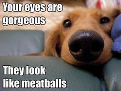 What your dog thinks of your lovely eyes.