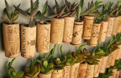 Great idea how to revive the wall  #succulent #cork