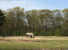 Neushoorn burgers zoo