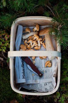 Into The Woods – Crostini with Wild Mushrooms & Ricotta — My Blue&White Kitchen - ∘❦ ᵗʰᵉ ˢᵉᵃˢᵒᶰ ᵒᶠ ᶠᵃˡˡᶤᶰᵍ ˡᵉᵃᵛᵉˢ ❦∘ - Wild Mushrooms, Stuffed Mushrooms, Edible Mushrooms, Blue White Kitchens, Kitchen White, Fall Inspiration, Anne With An E, Slow Living, Country Life