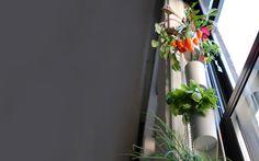 window farms - vertical farming - a salad a week - let's experiment