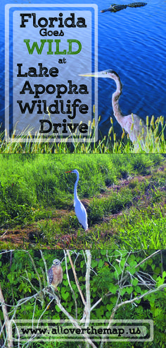 Lake Apopka Wildlife Drive – All Over The Map Visit Florida, Florida Living, Florida Travel, Weekend Trips, Day Trips, Apopka Florida, Disney World Theme Parks, Florida Springs, Park Resorts