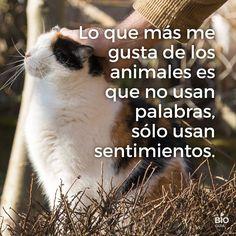 Lo que más me gusta de los animales es que no usan palabras, sólo usan sentimientos.