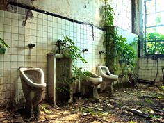 An abandoned Atlanta school's bathroom is slowly reclaimed by ivy and kudzu