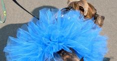 Halloween is quickly approaching and I have been scouring the internet in search of creative costume ideas for Athena. One thing's for cert... Pet Costumes, Costume Ideas, Dog Wedding Dress, Easy Crafts To Sell, Dog Tutu, Tutu Tutorial, Pet Clothes, Dog Clothing, Dog Clothes Patterns
