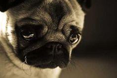 perro-llorando.jpg (400×267)