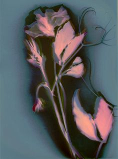 An image of a sweet pea and tendrils captured using an old photographic technique and then combined with modern technology. Copyright Susan Leake 2013.