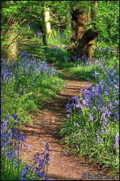 Ideas for a woodland garden & path. You will never truly experience the world until you create your own path. I think I will choose a path filled with flowers. Beautiful Landscapes, Beautiful Gardens, Woodland Garden, Woodland Flowers, Forest Garden, Walk In The Woods, Cottage In The Woods, Natural Garden, Plantation