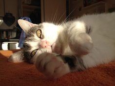Bamby  Katze | Pawshake