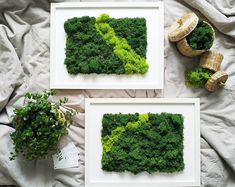 Items similar to Wall Moss Art Wall Garden Real Preserved Moss Care Free on Etsy Moss Wall Art, Moss Art, Real Plants, Live Plants, World Cutest Dog, Miniature Trees, Concrete Planters, Natural Energy, Grow Lights