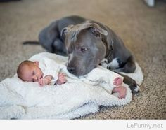 Dangerous Dog Biting Baby Funny Picture