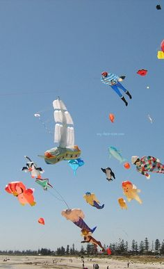 Mainly 'line laundry' in this shot, taken at the AIKF 2008. Adelaide International Kite Festival. The black parafoil at top right seems to be nudging the legal altitude limit - 400 feet above ground! T.P. (my-best-kite.com)