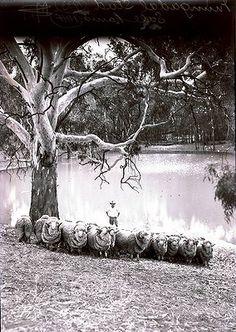Fairfax Archive: Shearing Shed Click And Go, European Map, Australian Photography, Dad Day, Great Life, Gap Year, Farm Gardens, Shearing, Farm Life