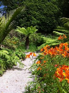 Tresco Abbey Gardens in Isles of Scilly, Isles of Scilly
