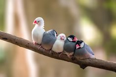 Photograph Sleeping Birds by Sami Multasuo on 500px