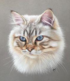 24 New Ideas Dogs Drawing Sketches Pet Portraits Pastel Portraits, Pet Portraits, Animal Paintings, Animal Drawings, Pencil Drawings, Watercolor Cat, Warrior Cats, Domestic Cat, Pastel Art