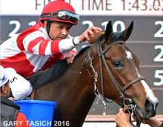 Mike cools off Songbird after a win Horse Racing, Race Horses, American Pharoah, Sport Of Kings, Thoroughbred Horse, Girl Running, Horse Farms, Saddles, Kentucky Derby