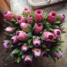 What native flowers are available in March?  I often get asked what will be available at certain times of the year. Maybe its a weddi...