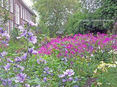 Vrolijke kleuren en makkelijke, no-nonsens planten in collectieve tuin 'De Omscholing' in Rotterdam. Beplantingsplan gemaakt door Marilene Vermeulen van Tuinatelier Herman & Vermeulen.