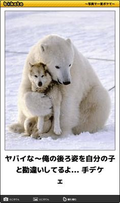 Animals And Pets, Funny Animals, Wild Nature, Funny Clips, Love Art, Funny Images, Polar Bear, Dog Cat, Best Friends