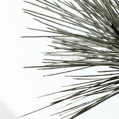 https://www.etsy.com/listing/547167900/pine-needles-print-minimalist-art-print?ref=shop_home_active_7