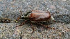 big bug... by Walter W. Krijthe