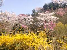 Shangri-la in Fukushima