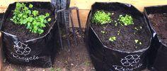 Bokashi kjøkkenkompostering gir mindre utslipp av drivhusgasser og mindre svinn enn tradisjonell kompostering av matavfall. Bokashi, Plants, Compost, Plant, Planets