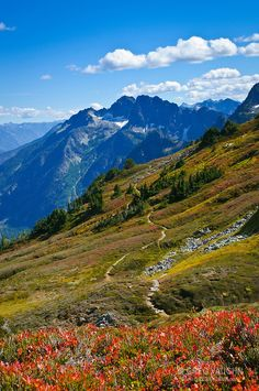 Sahale Arm Trail and view towards Magic Mountain above Cascade Pass, North Cascades National Park, Washington.