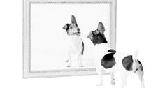 So, what does your doggie's mirror say about you? - Dog Pet Magazines in Westchester County NY, Fairfield County CT, New York City, and Long Island, USA by THE PET GAZETTE.