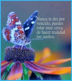 Good Morning May Your Day Be Filled With Joy And Peace morning good morning morning quotes good morning quotes Spiritual Images, Spiritual Messages, Spanish Inspirational Quotes, Spanish Quotes, Good Morning Good Night, Good Morning Quotes, Morning Morning, Peace Pictures, Wordpress Website Design