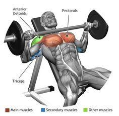 PECTORAUX - Muscles utilisés pour l'entraînement DEVELOPPE INCLINE A LA  BARRE