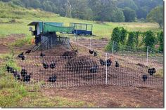 Building the Chicken Tractor on Steroids