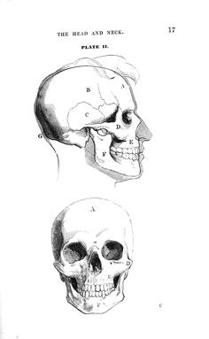 Skeleton Drawings, Human Skeleton, Art Drawings, Human Skull Anatomy, Human Anatomy Drawing, Anatomy Books For Artists, Artistic Anatomy, Anatomy Sketches, Drawing Ideas