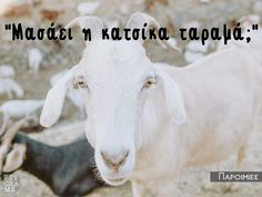True Words, Humor, Animals, Quotes, Quotations, Animales, Animaux, Humour, Funny Photos