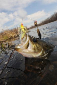 Largemouth Bass Fishing - The source for bass fishing tips and techniques.