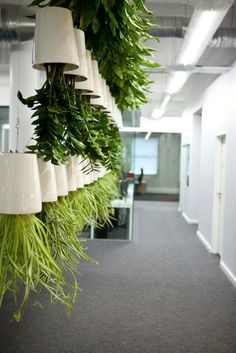 Boskke Sky Planter Ceramic medium, 4D1 Office, Interiors designed by Bone Studios.