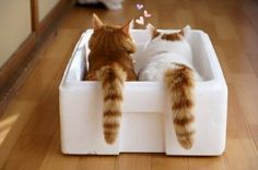 Best friends even share The Box