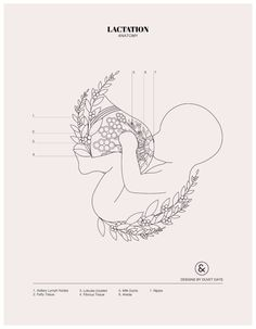 Lactation - Colouring Sheet - Designs by Duvet Days Anatomy Illustrations Pelvis Anatomy, Anatomy Art, Heart Anatomy, Brain Anatomy, Coloring Sheets, Coloring Books, Anatomy Coloring Book, Pregnancy Art, Ectopic Pregnancy