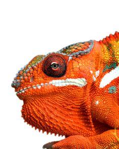 Seraphon Colour Scheme - Seraphon Color Scheme - 9 color motifs with reference images Yellow Painting, Love Painting, Colorful Lizards, Magnificent Beasts, Army Colors, Fotografia Macro, Orange Is The New, Color Psychology, 3d Prints