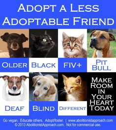 """Please consider a """"special Needs"""" pet. They need you. But please never get a pet if you are not ready to take on the responsibility: nothing sadder than when they go from home to a shelter"""